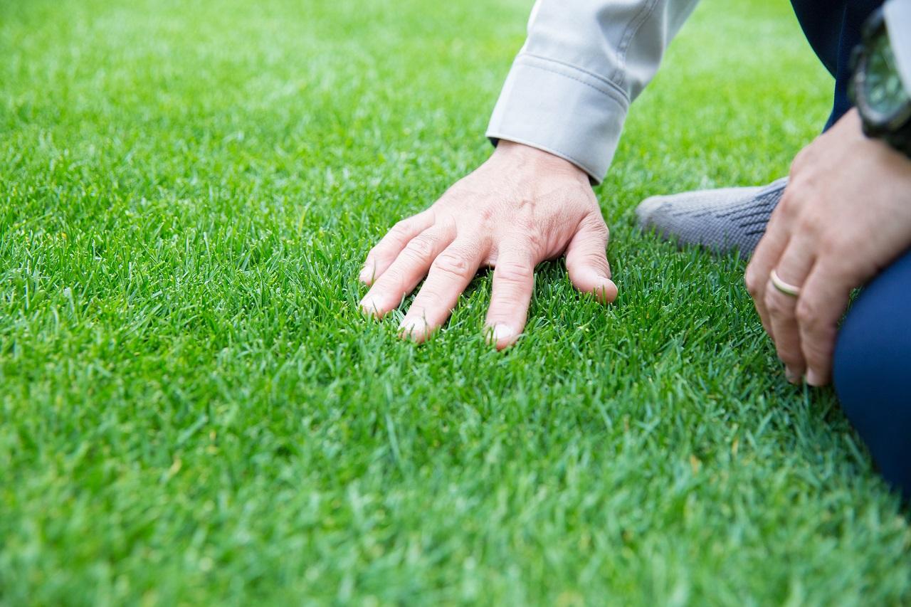 和賀友樹 芝を触る手アップ
